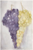 Sarjasta Rypäleitä / From  a series of Grapes, 2009, 49 x 31,5 cm